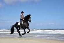 Hoorn, Terschelling, strand paardijden