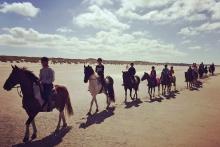 paardrijden strand terschelling