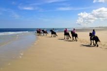 strandrit Terschelling met de pony's