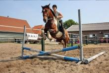 springles ponykamp terschelling
