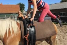 ponykamp Terpstra