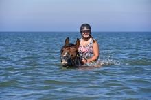 zwemmen paarden terschelling