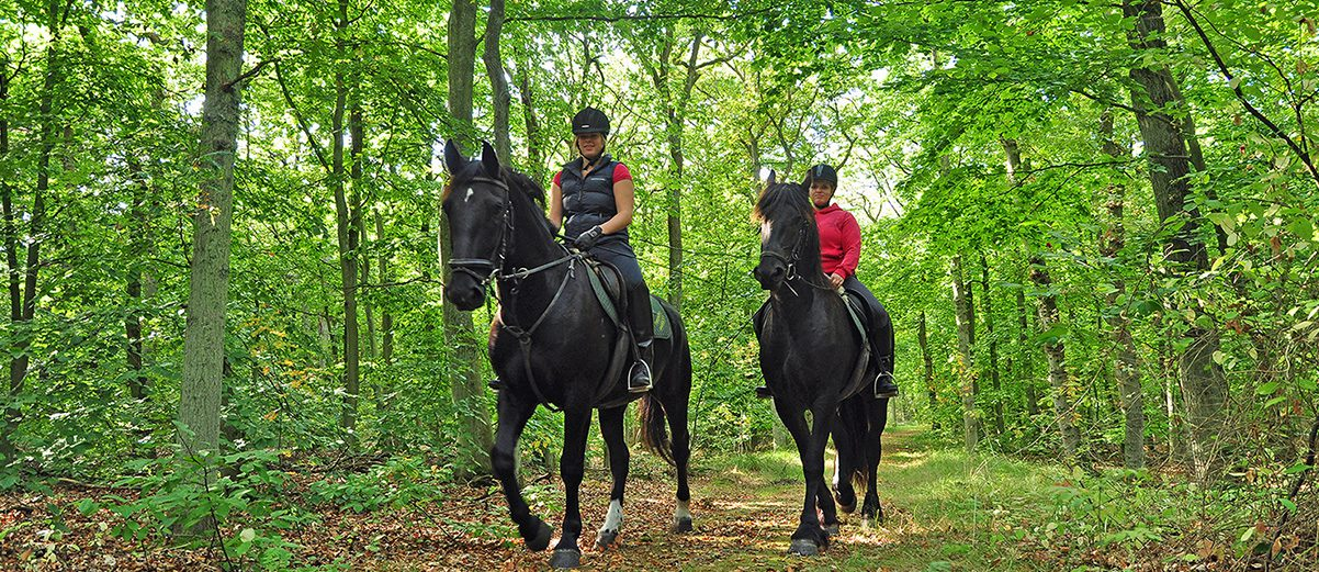 Zelfstandig paardrijden voor ervaren ruiters mogelijk.
