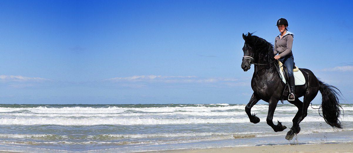 Paardrijgids
