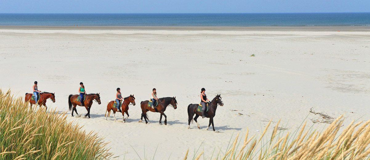 Paardrijden voor zowel beginners als gevorderde ruiters.