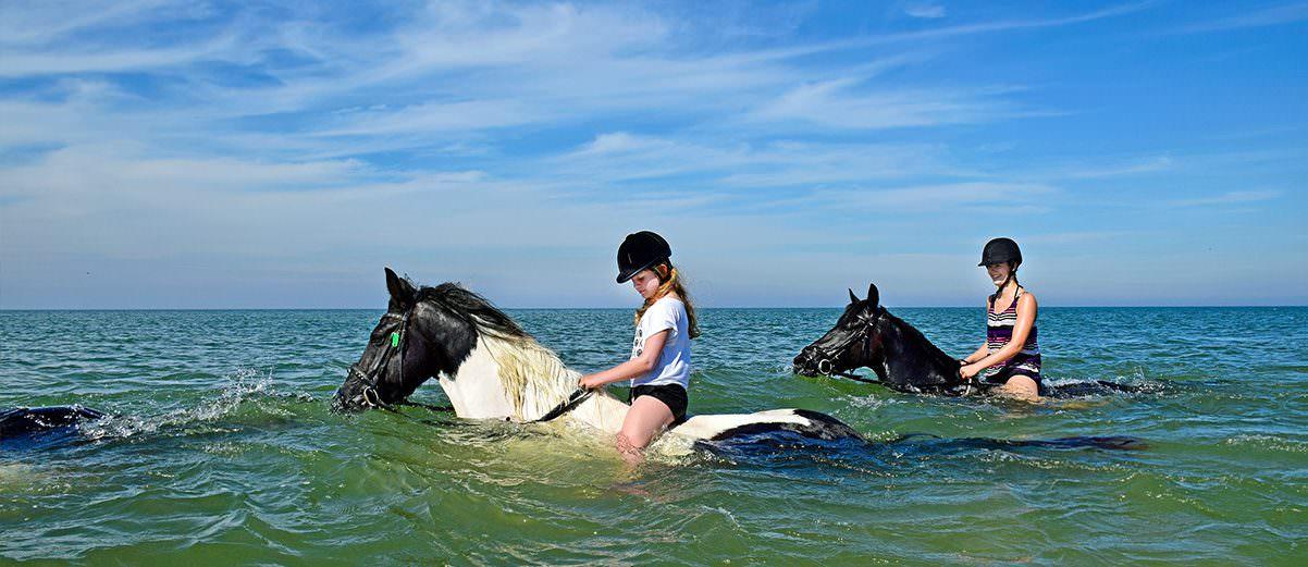 Paardrijden en zwemmen in de zee op Terschelling.